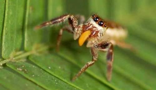 spider-veg